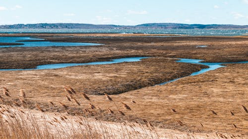 Free stock photo of landscape, marsh, ocean