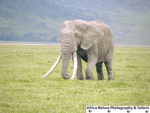 Kostnadsfri bild av ngorongoro krater, serengeti, wildlife safari