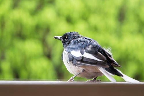 Selective Focus Photography of Black Bird