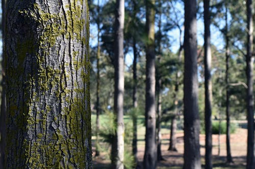ağaç, ağaç kabuğu, ağaçlar, çam içeren Ücretsiz stok fotoğraf