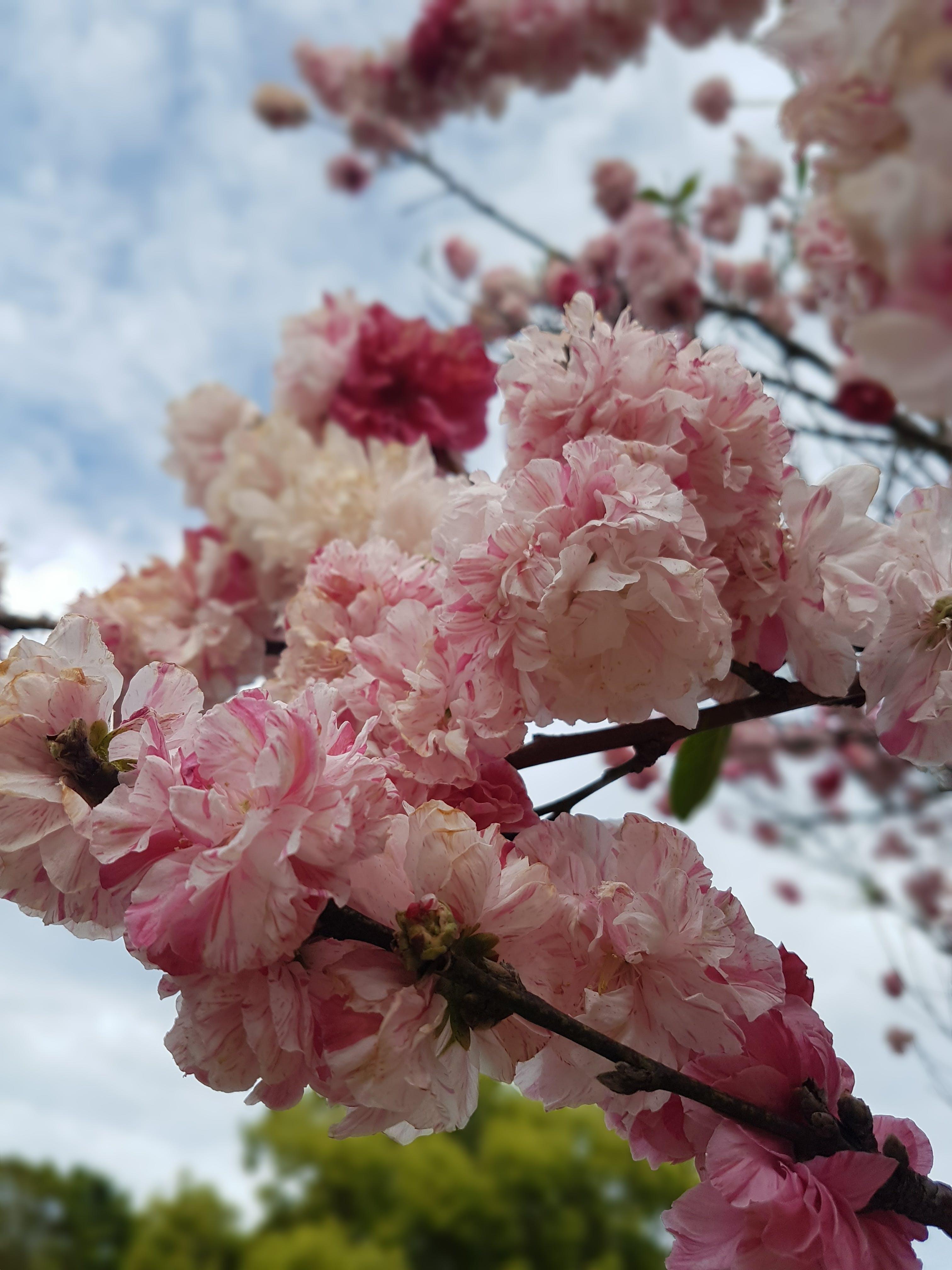 Free stock photo of beautiful, bright, flowers, mothernature