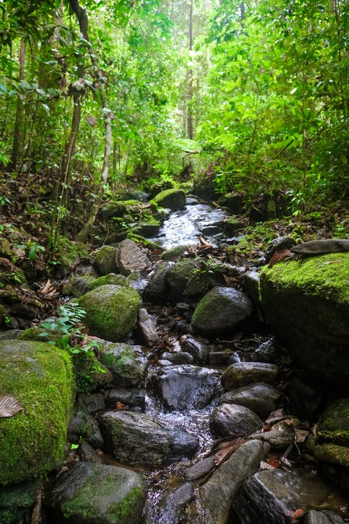 Free stock photo of forest, green, nature, rain forest