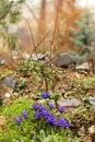 flowers, blue, spring