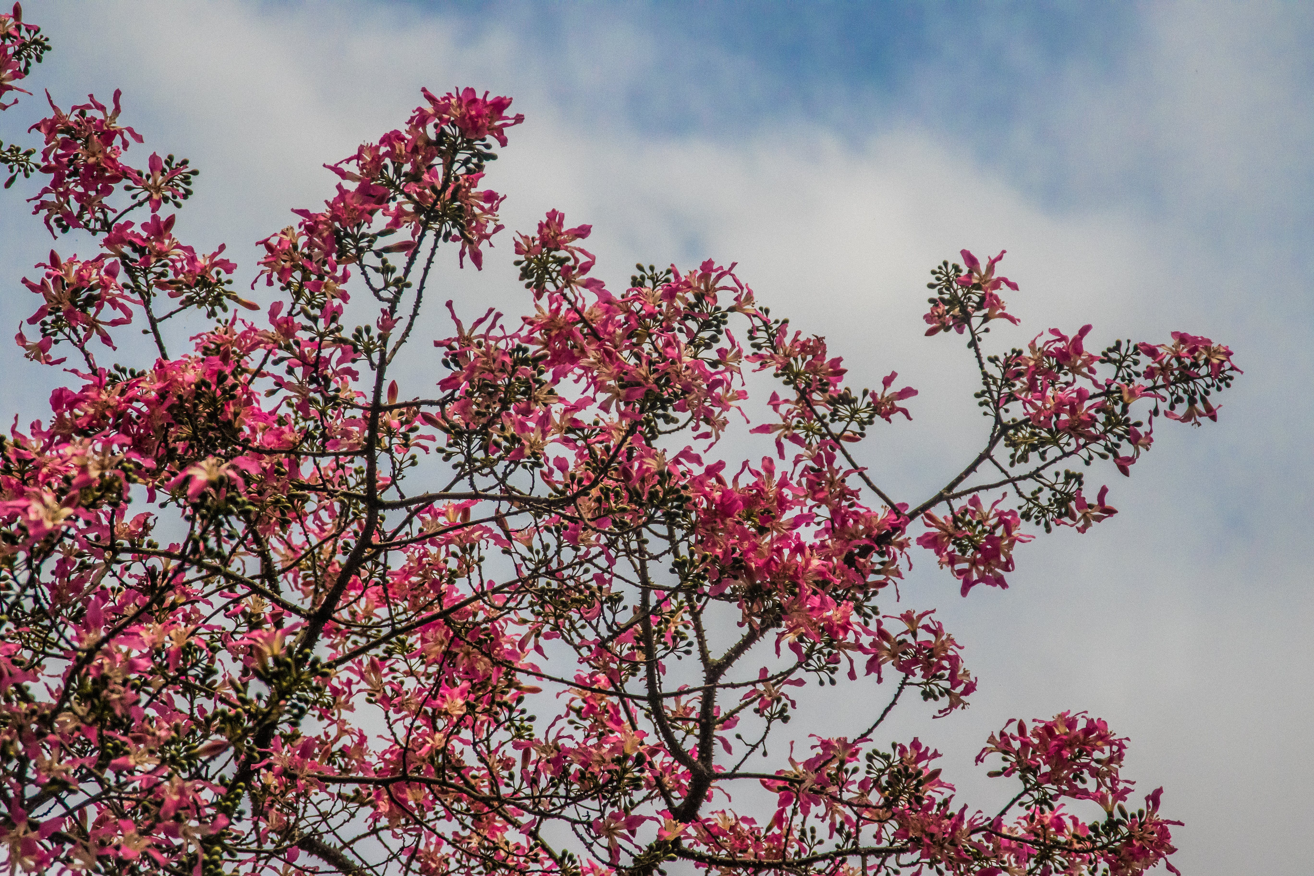 Free stock photo of #nature, blue sky, clouds, flower
