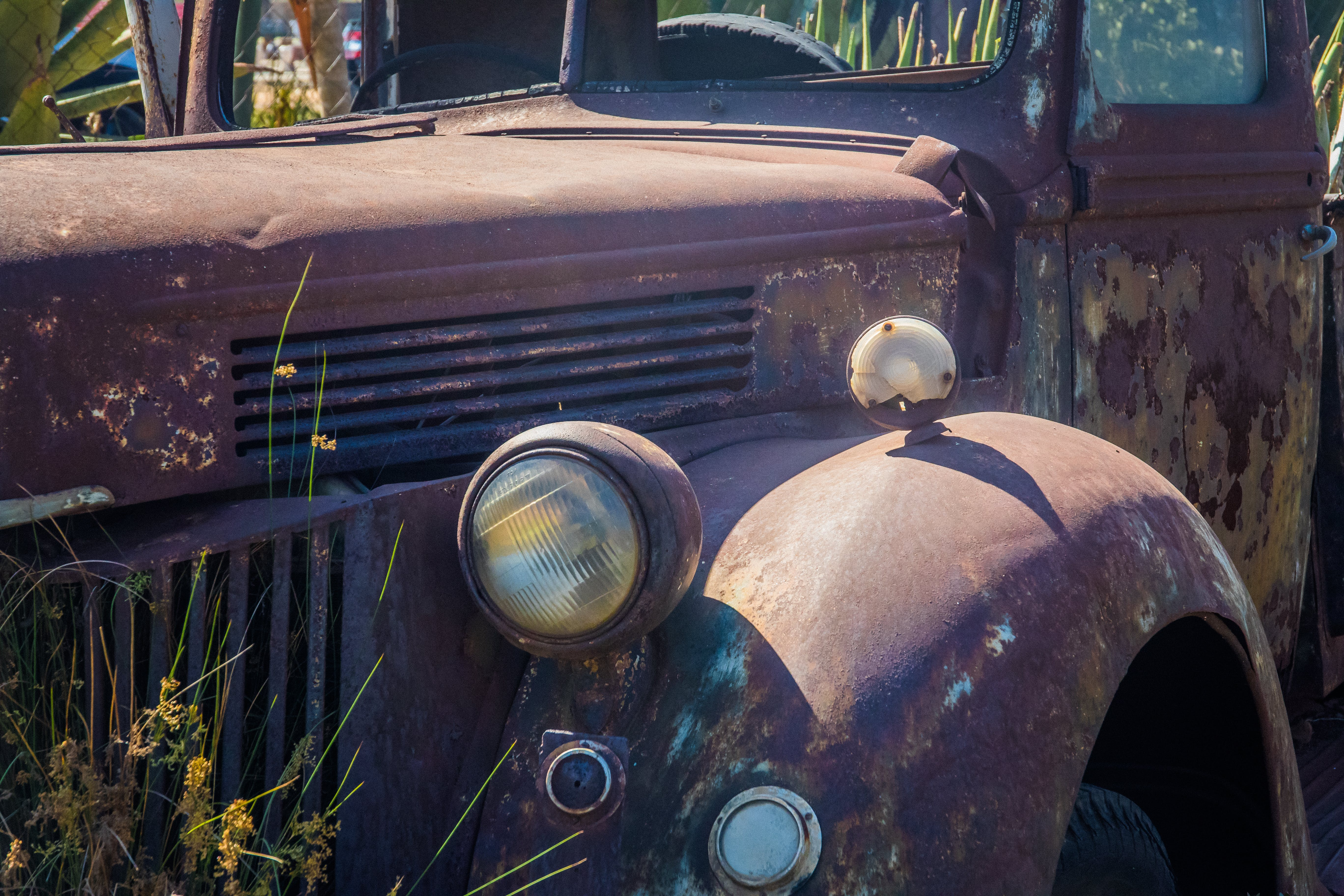 Free stock photo of car, decor, drive, garden