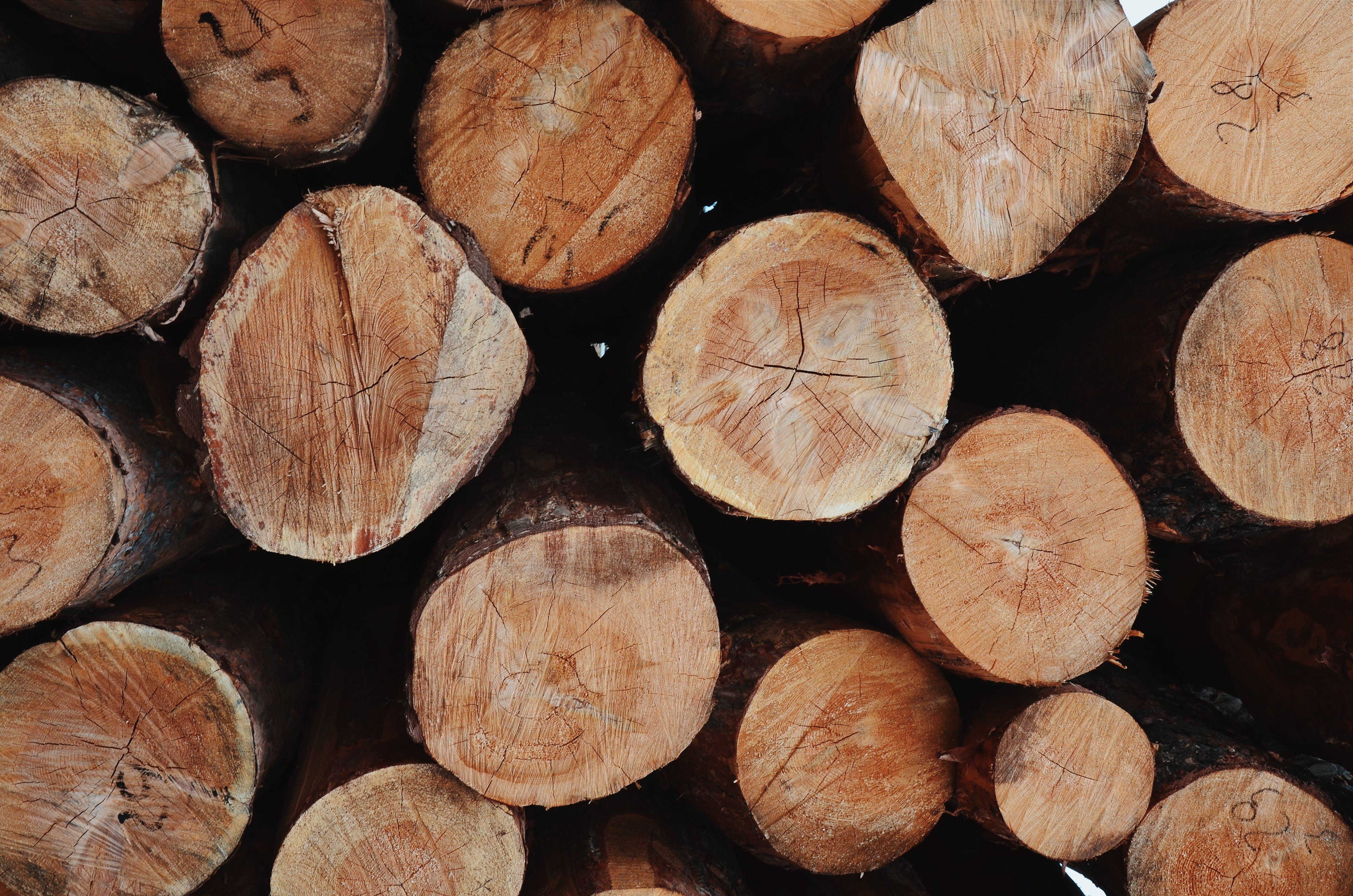 ağaç gövdeleri, ağaç kütüğü, doğranmış, istif içeren Ücretsiz stok fotoğraf