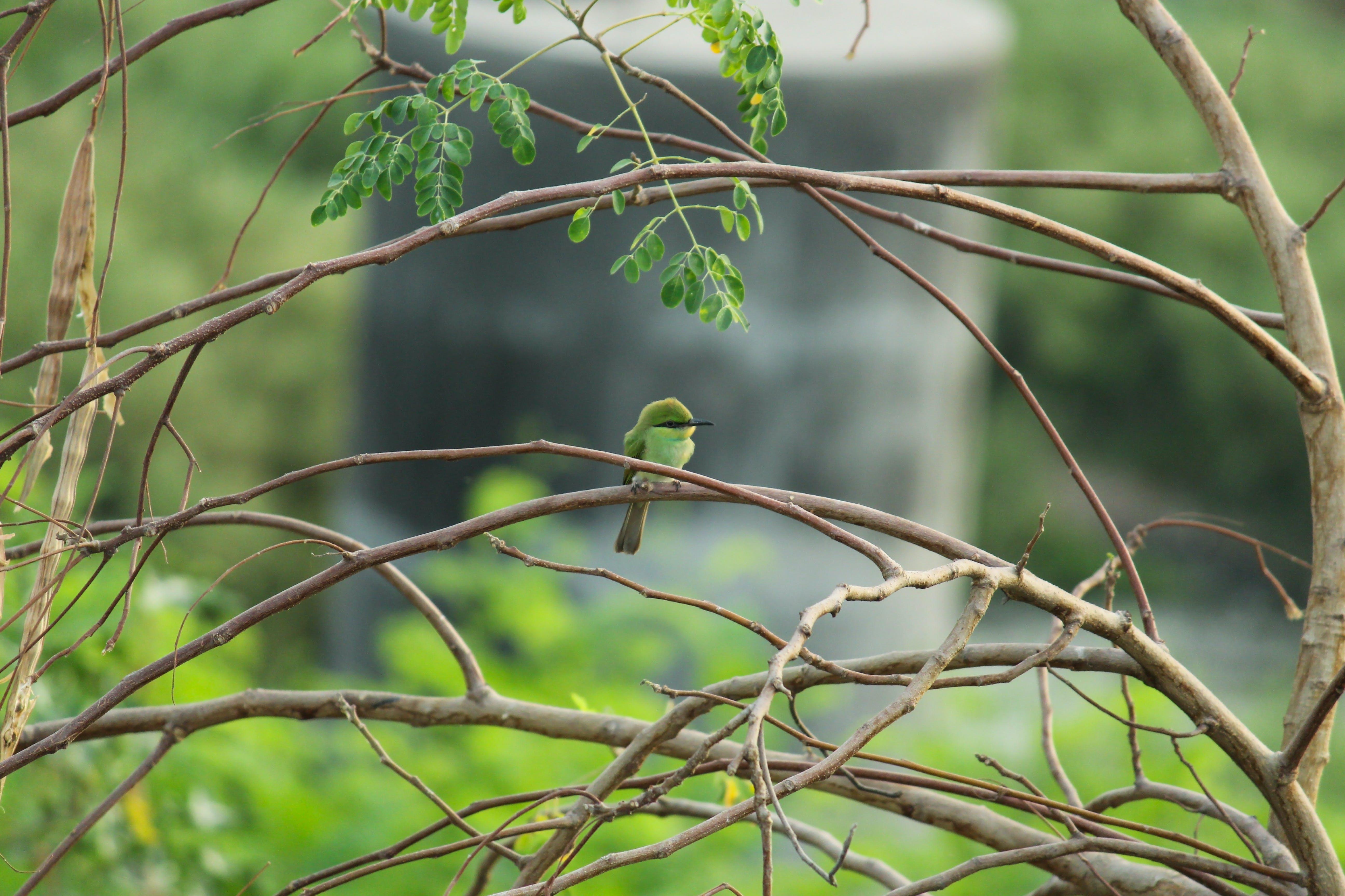 Foto d'estoc gratuïta de #beeeater #birds #bird #nature #birdwatching #bird, #greenbeeeater #sunshine #tree #beauty, #light #protectnature #cutepins #wildlifepin #anim