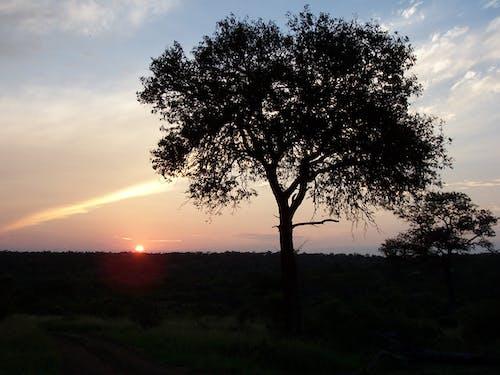 Free stock photo of africa, sunset
