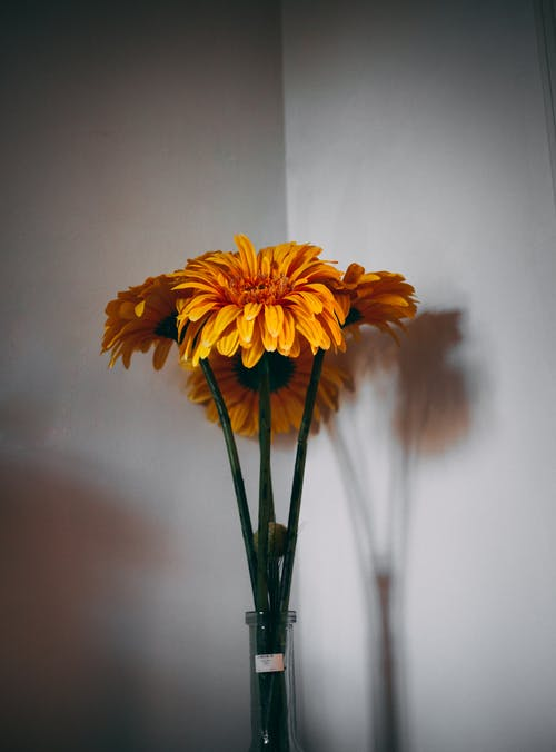 Yellow Daisies in Vase