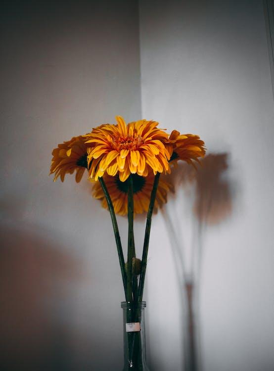 Yellow Daisies in Vase