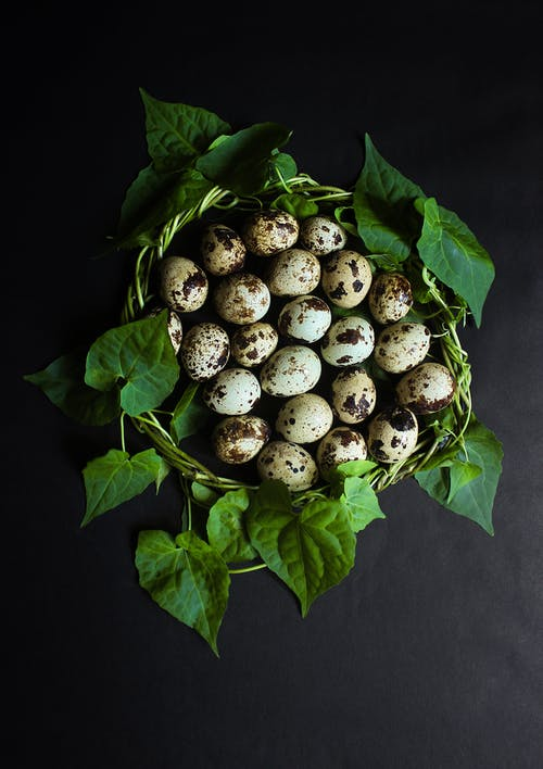 Quail Eggs Near Green-leaf Plant