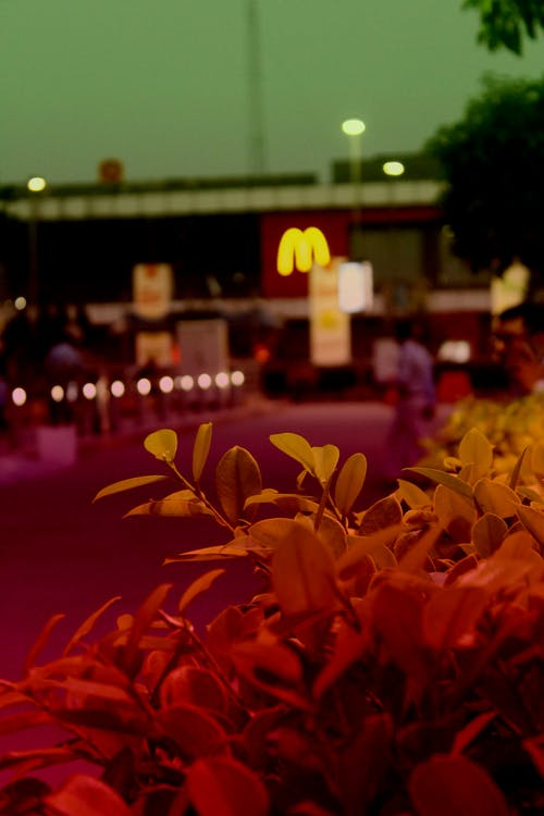 Gratis arkivbilde med burger, kveld, mat, sentre