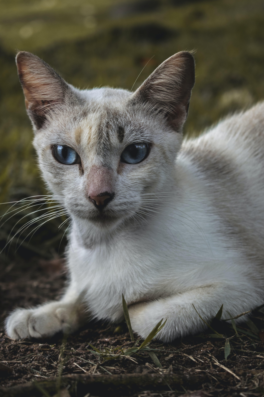 Gratis lagerfoto af dyr, dyrefotografering, kat