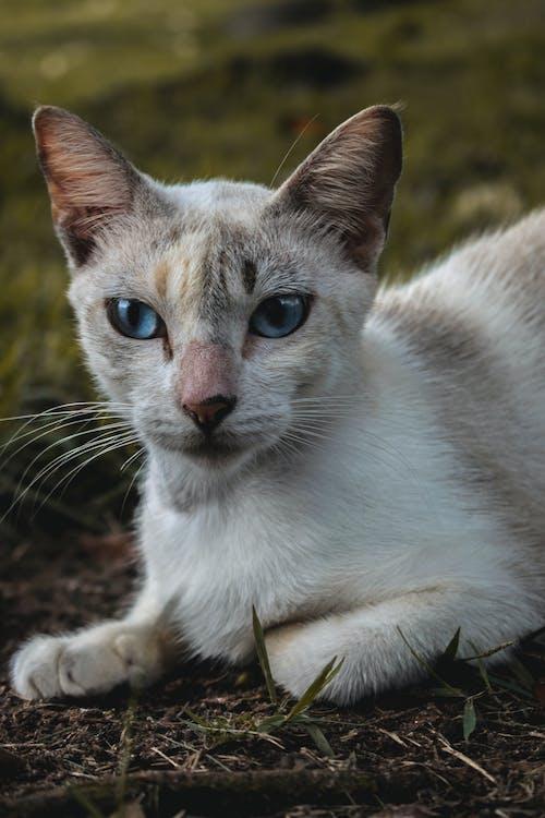 動物, 動物攝影, 貓 的 免費圖庫相片