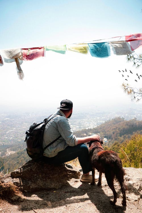 Man sitting on a rock on top of a mountain along with his dog - Air Travel and Pets