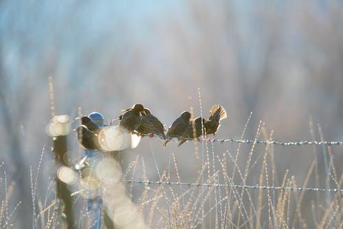 Gratis arkivbilde med fugler, stær