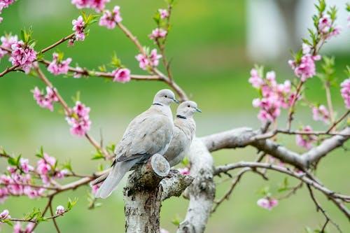 Základová fotografie zdarma na téma bokeh, holubice, strom