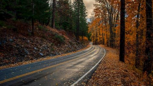 Fotobanka sbezplatnými fotkami na tému cesta, jeseň, listy