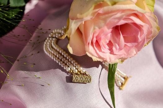 Kostenloses Stock Foto zu romantisch, sommer, blütenblätter, verschwimmen