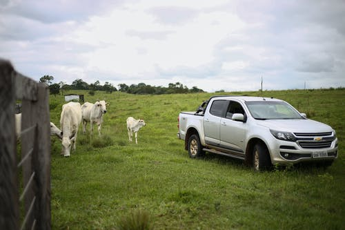 Ảnh lưu trữ miễn phí về bò, bò cái, chevrolet