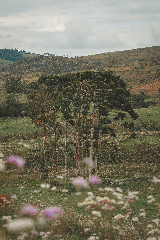 bäume, berg, draußen