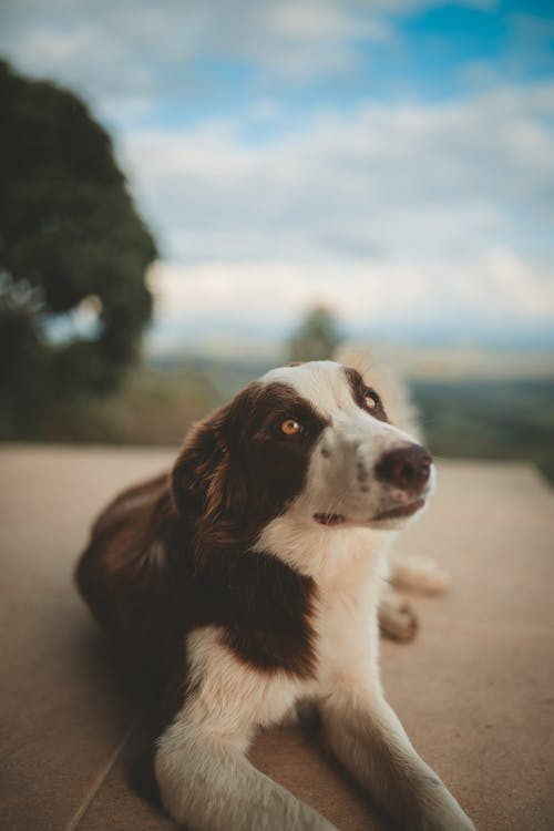 Selective Focus Photography of Brown and White Dog