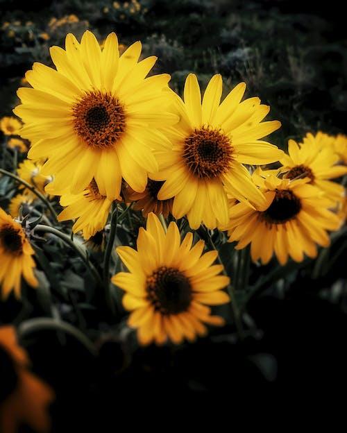 Fotobanka sbezplatnými fotkami na tému kvet, rozmazanie, žltá