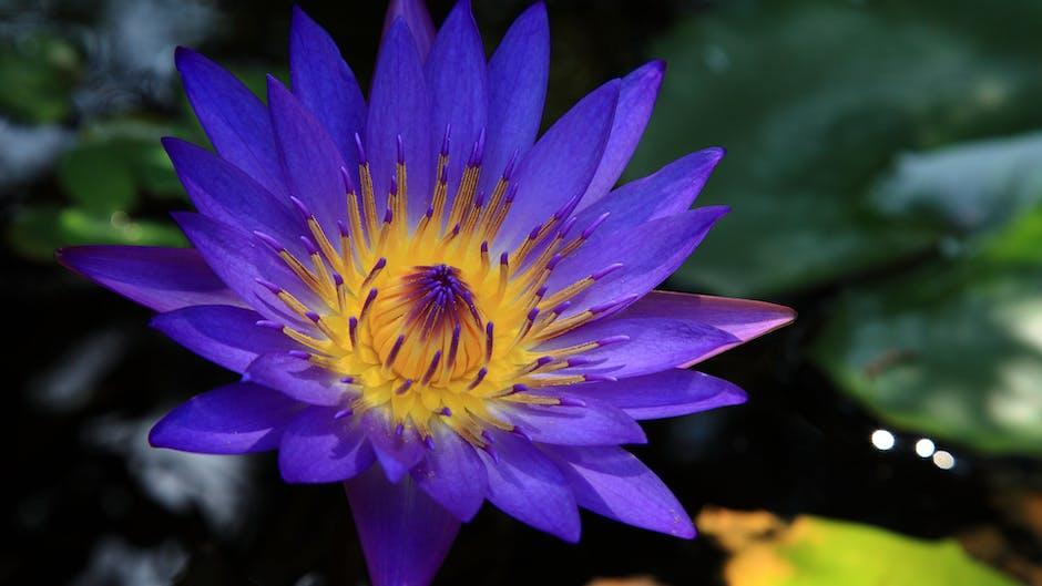 New free stock photo of summer, garden, flower