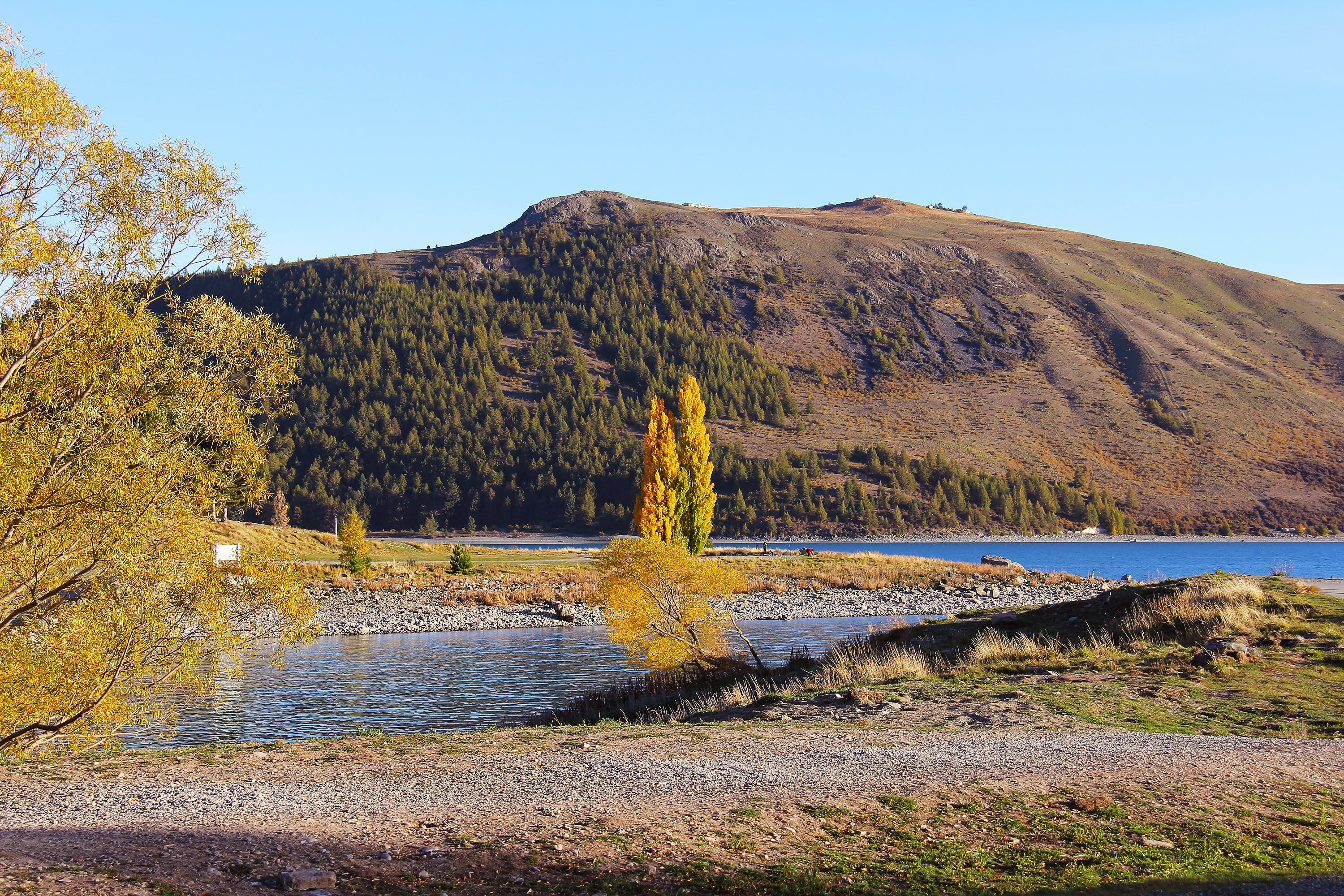 Yellow Tree on Lake With Brown Mountain Background Photo