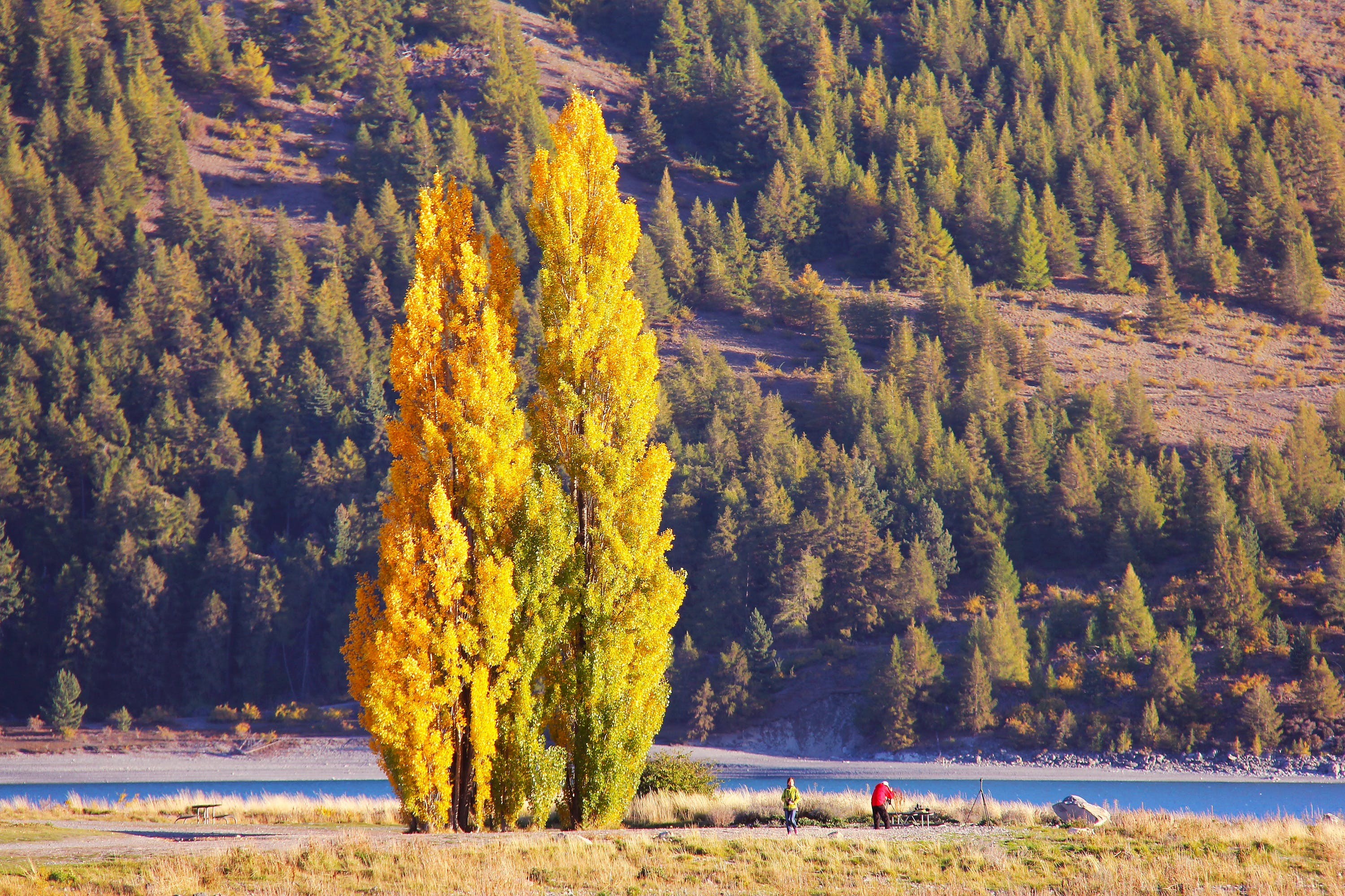 Two Person Beside Body of Water Near Pine Trees