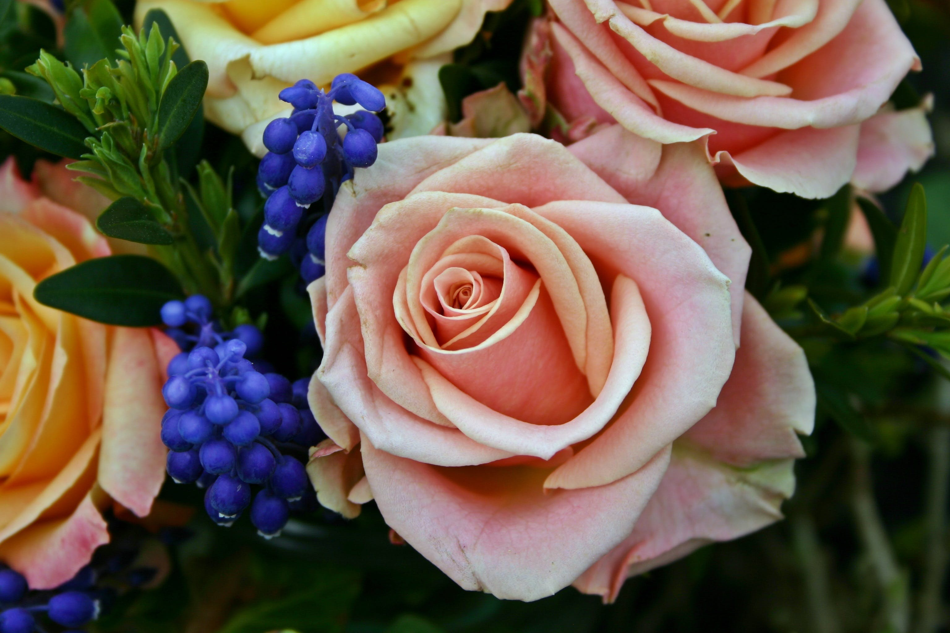 Free stock photo of colorful, flower, decoration, rose