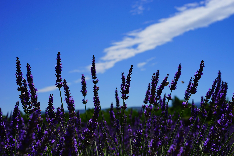 Fotos de stock gratuitas de al aire libre, aroma, aromático, bonito