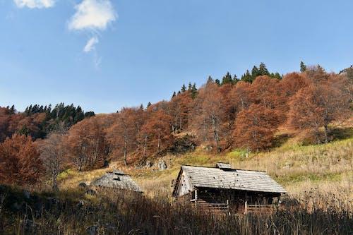 4k duvar kağıdı, açık hava, ağaçlar, ahşap kulübe içeren Ücretsiz stok fotoğraf