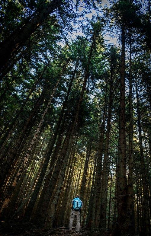 4k duvar kağıdı, açık hava, ağaçlar, arka fon içeren Ücretsiz stok fotoğraf