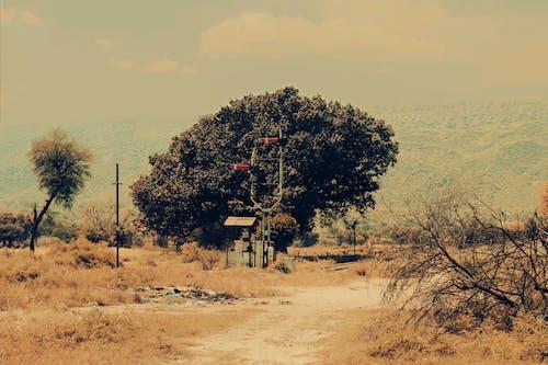 Δωρεάν στοκ φωτογραφιών με kg υπέρ φιλμ, kgprofilms, pakistani σήματα σιδηροδρομικής γραμμής, δέντρο σε σιδηροδρομική γραμμή