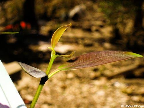 Δωρεάν στοκ φωτογραφιών με #φύση