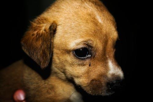 Ilmainen kuvapankkikuva tunnisteilla d, koira, koiranpentu, koirat