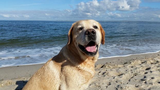 Free stock photo of sea, beach, joy, North Sea