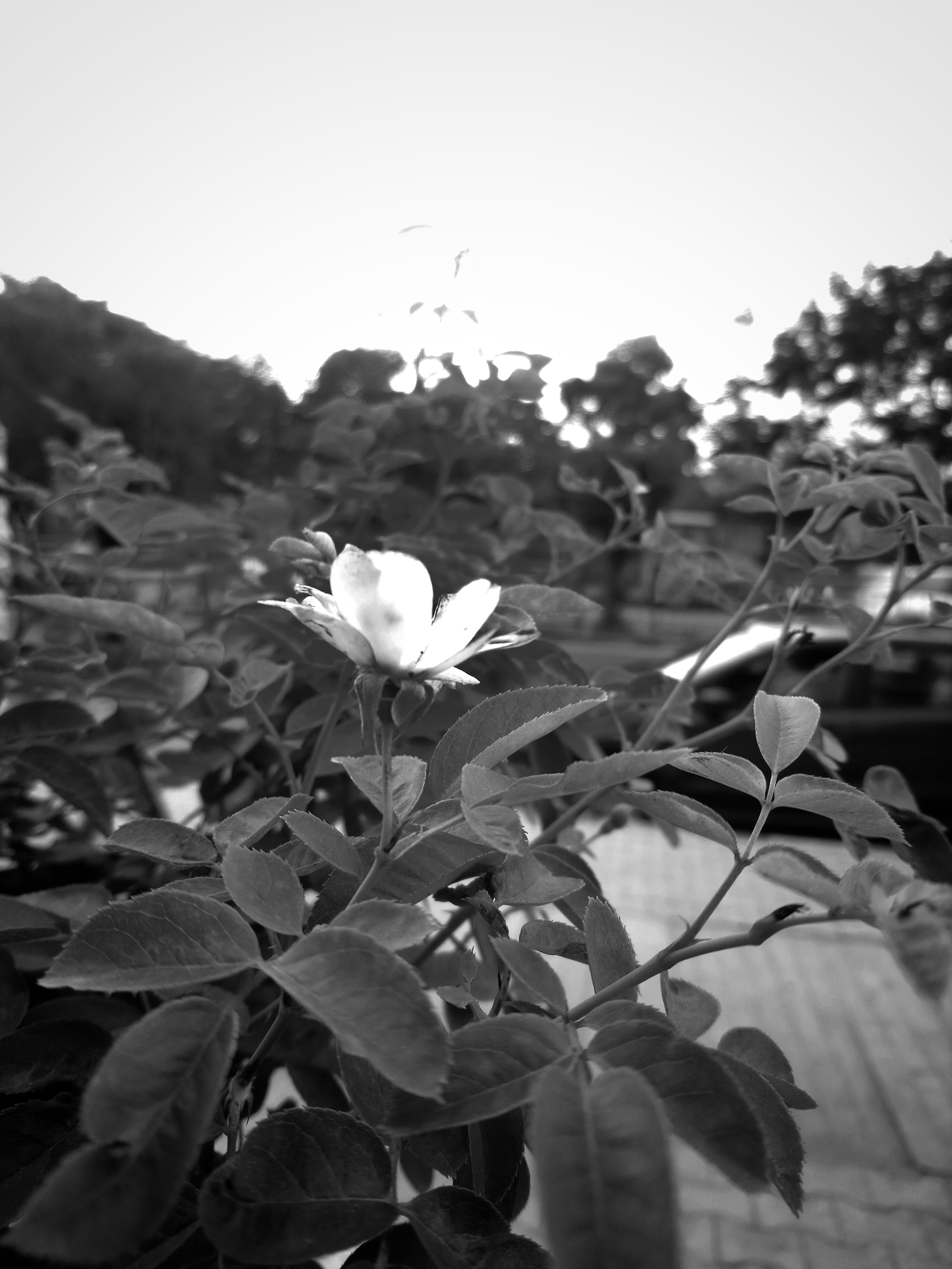 Free stock photo of black and white, dark, dark blue, mobile photography