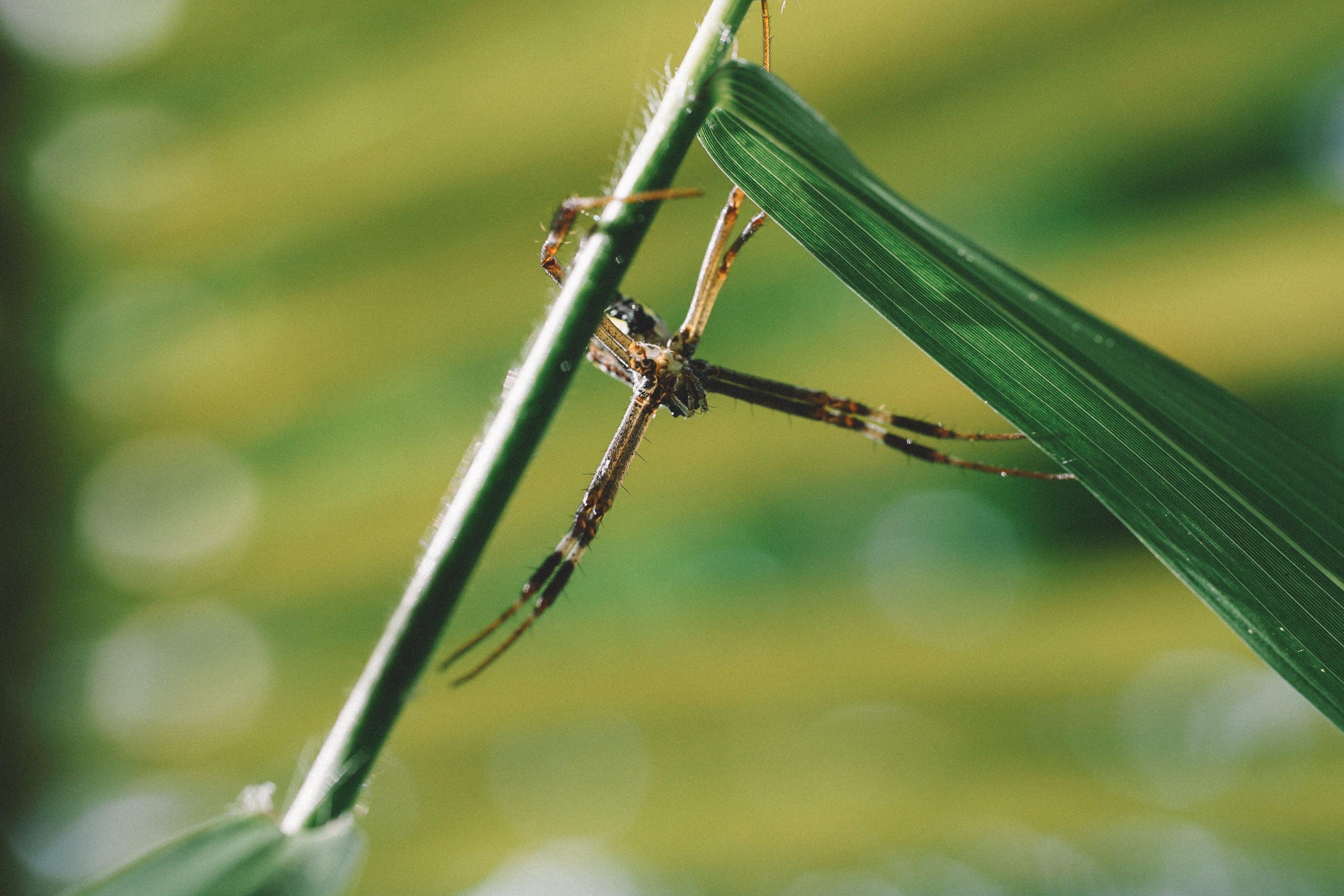 거미, 거미류, 매크로, 식물의 무료 스톡 사진