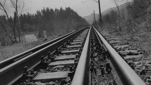 border collie, demir yolu, eski, Tarih içeren Ücretsiz stok fotoğraf