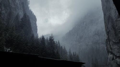 bulutlu, çam ağaçları, dağlar, kar içeren Ücretsiz stok fotoğraf