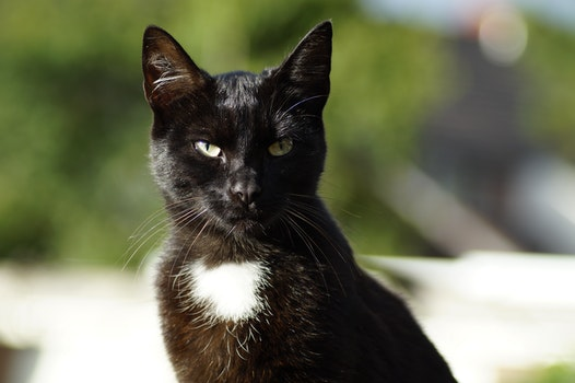 Shallow Focus Photography of Black Cat