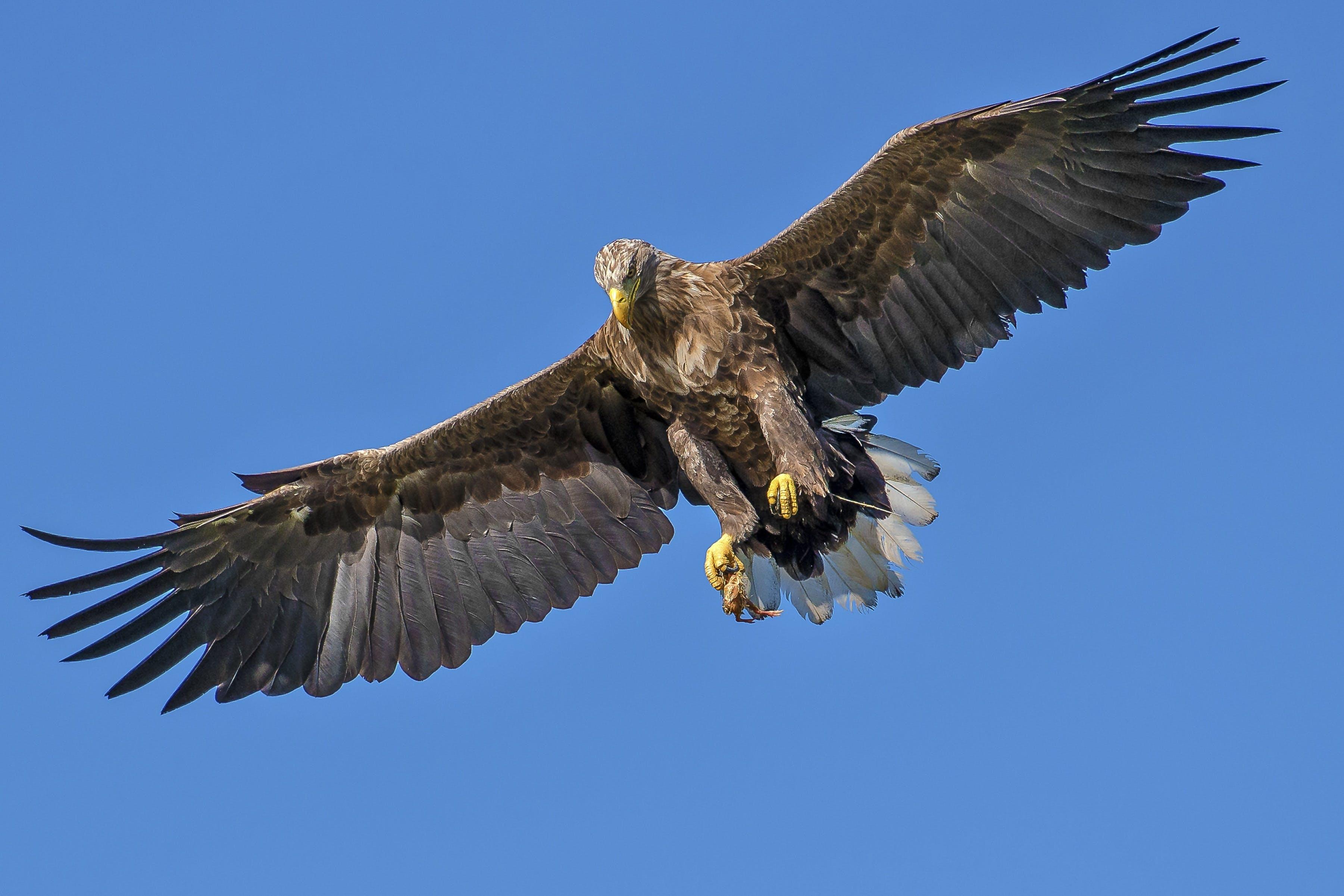 Flying Bird during Day