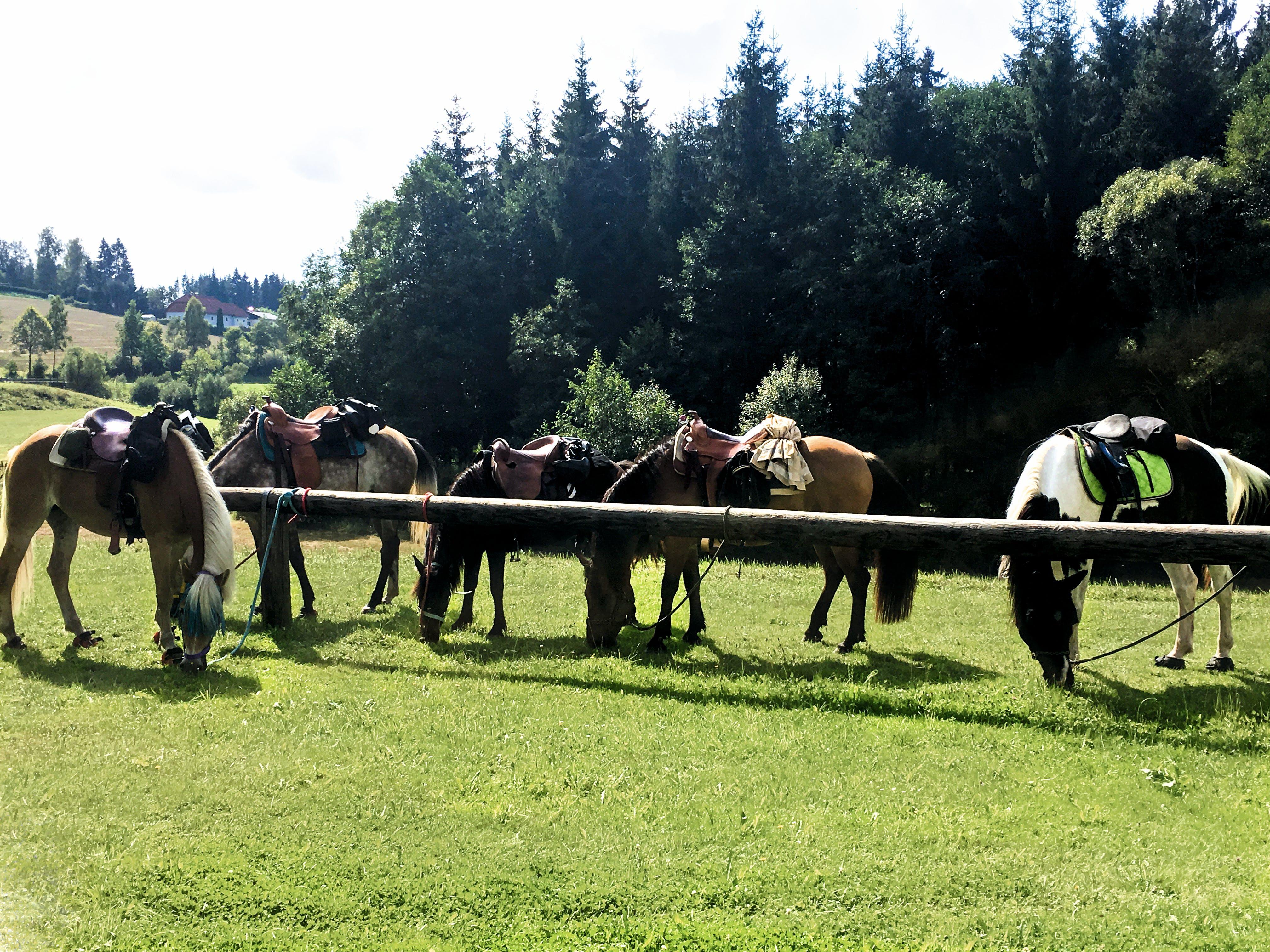 Free stock photo of horse, landscape, riding
