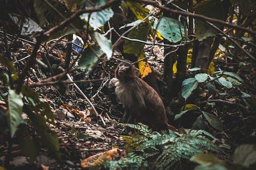Ảnh lưu trữ miễn phí về con khỉ, Hình nền 4k, hoang dã, rừng