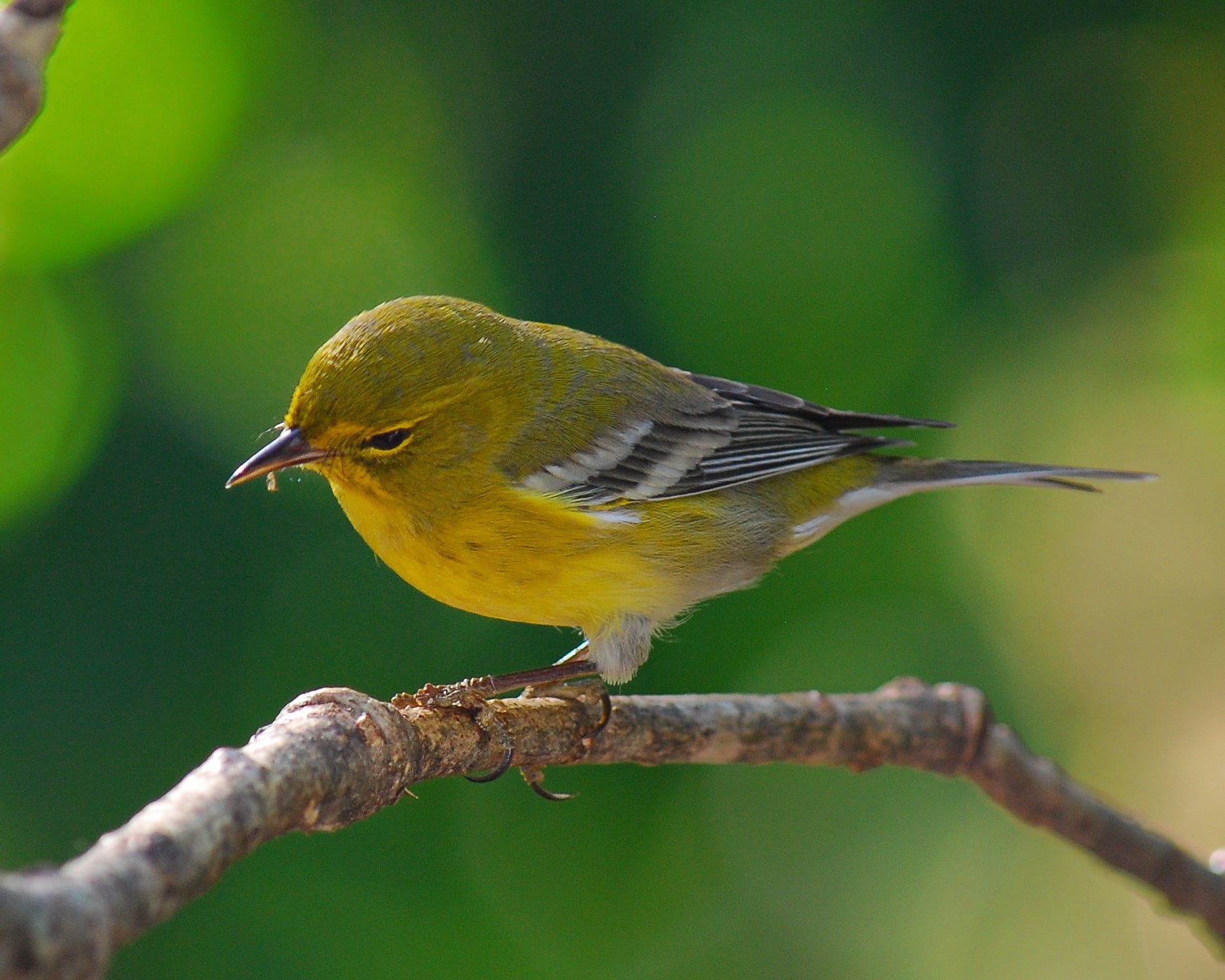 Free stock photo of bird, nature, outdoors, perching