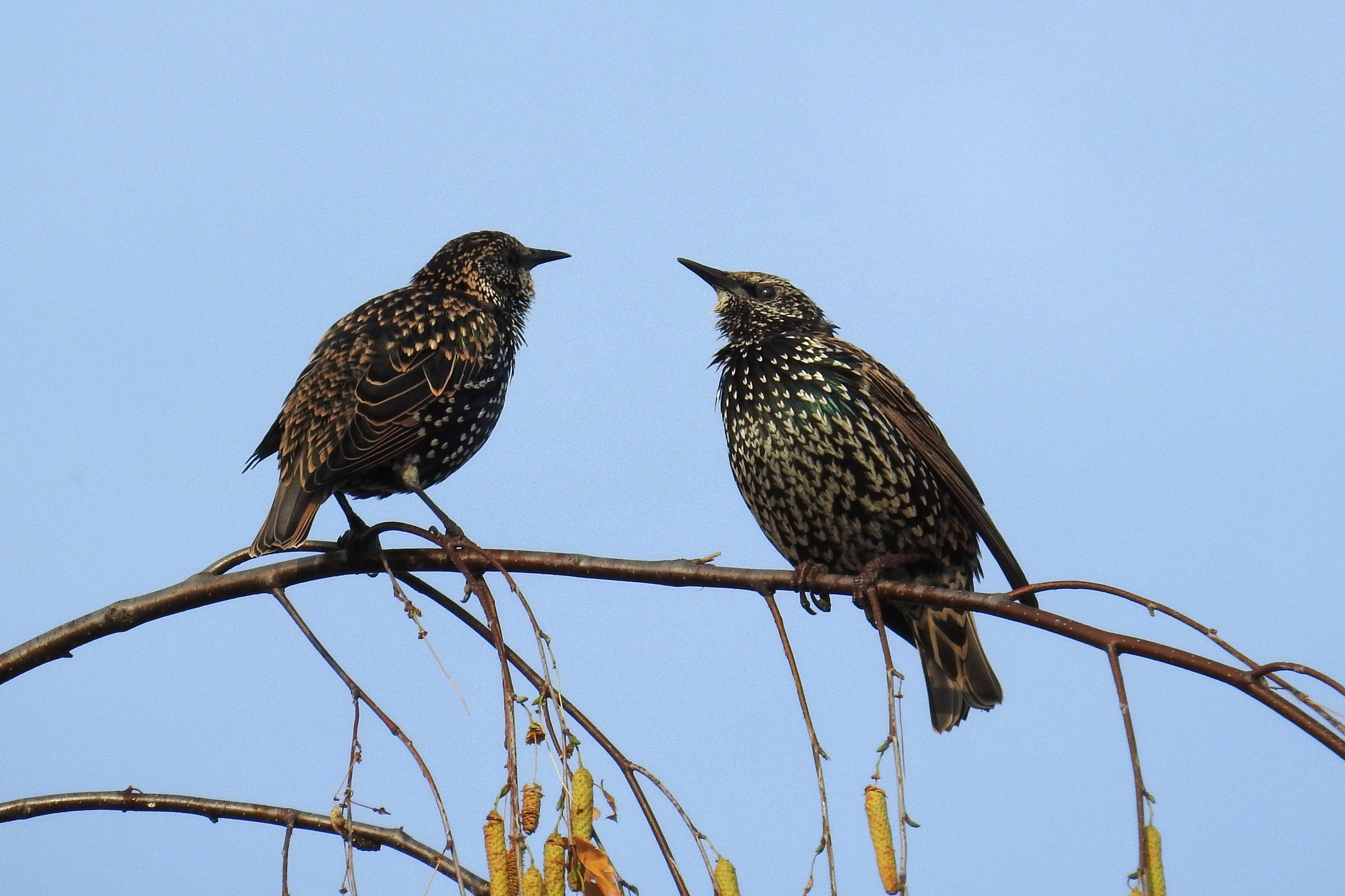 Free stock photo of nature, birds, star, stare