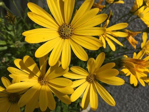 Photos gratuites de fleur, nature