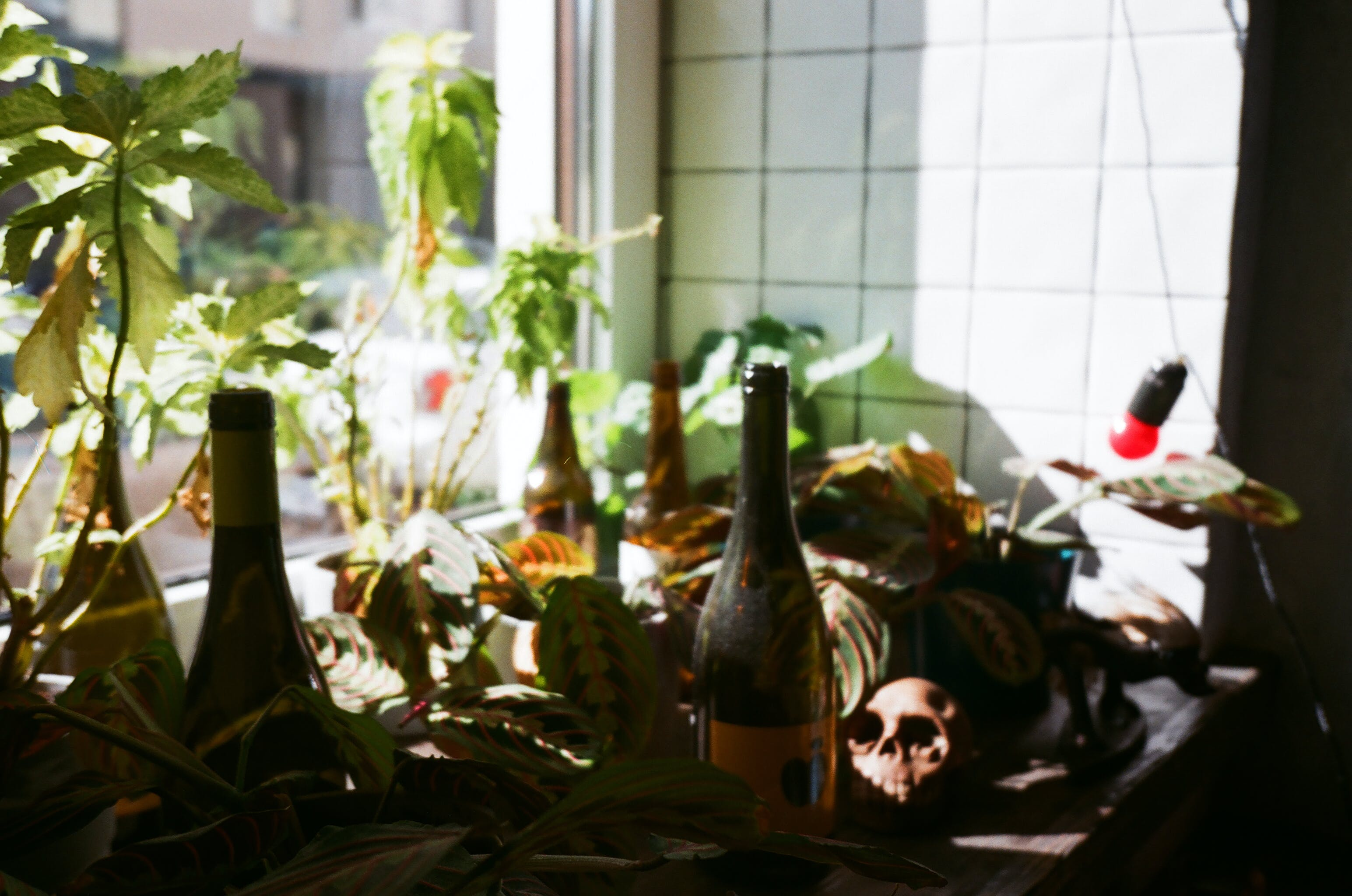 Brown Bottle on Table